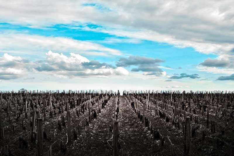 bordeaux_vineyard-view-chateau-pichon-longueville_loxley-browne